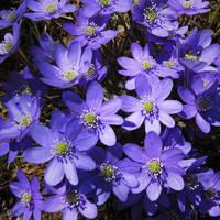 Blue by JoannaMoory