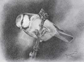 Blue Tit Drawing 2012 by JoannaMoory