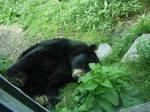 Sleeping Bear 2