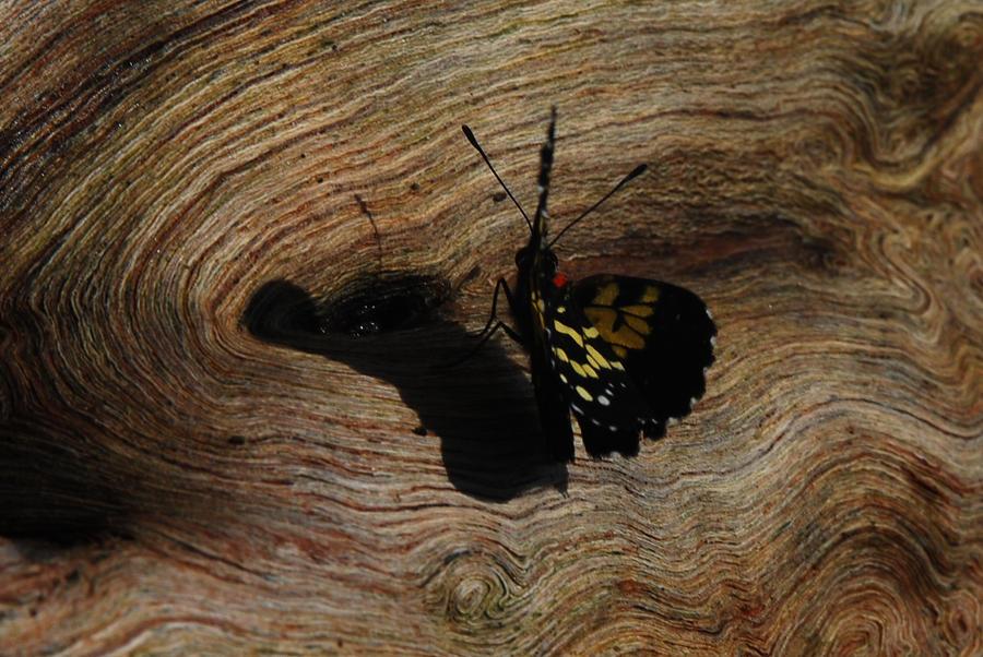Costa Rica - Butterfly 1 by LLukeBE