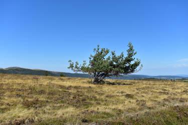 Tree by LLukeBE