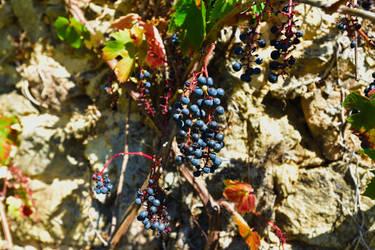 Raisins by LLukeBE