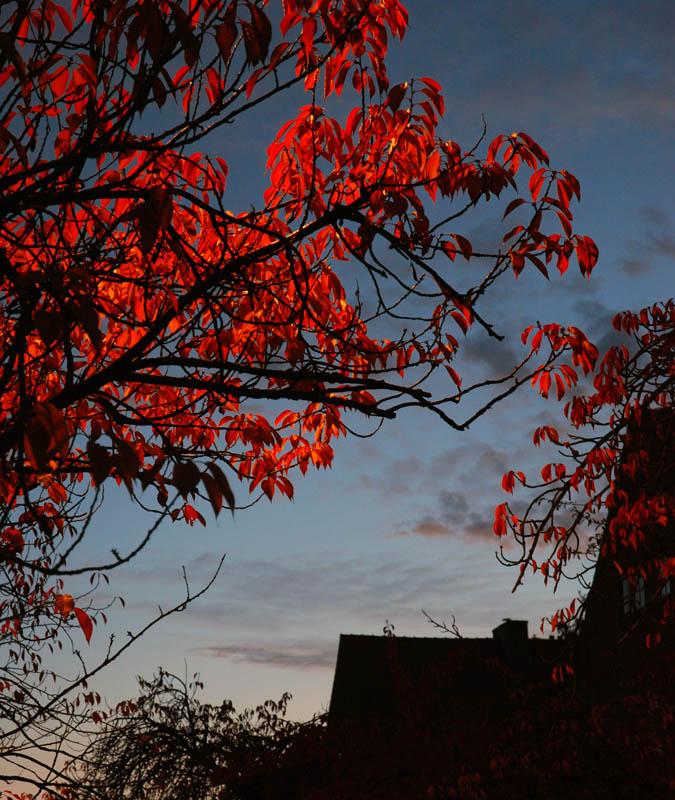 Night leaves by LLukeBE