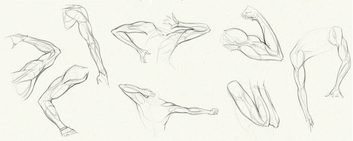 Anatomy Challenge, Part 02 - Arms