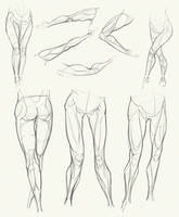Anatomy Challenge, Part 04 - Legs by AzizlaSwiftwind