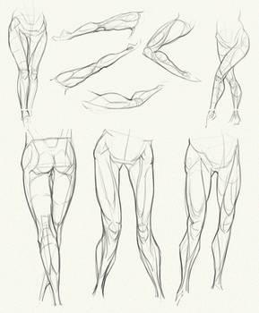 Anatomy Challenge, Part 04 - Legs