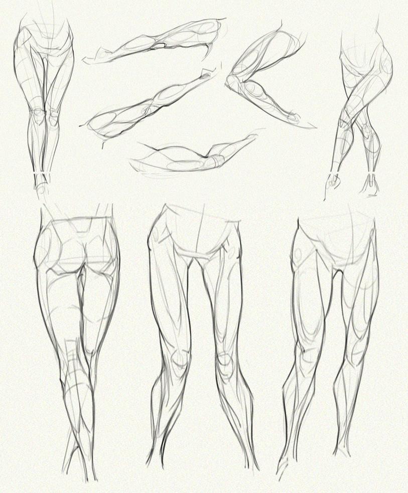 anatomy challenge  part 04