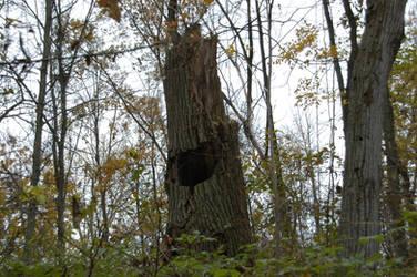 hollow tree by Demonikastock