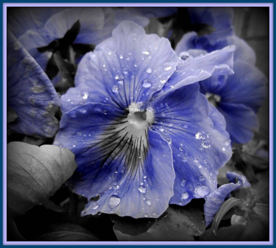 FEELING A LITTLE BLUE!
