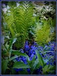 Pretty Ferns