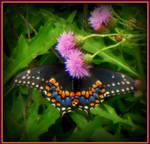 Don't Go Chasing Butterflies
