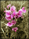 A SWEET PEA FOR ALL YOU SWEET PEA'S!