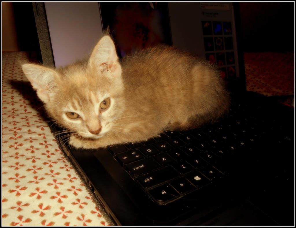 Keyboard Kitty by AudraMBlackburnsArt