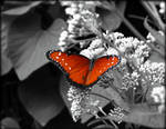 Butterfly Selective Color