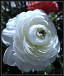 Simple White Flower