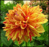 Fluffy Orange Flower by Sugaree-33