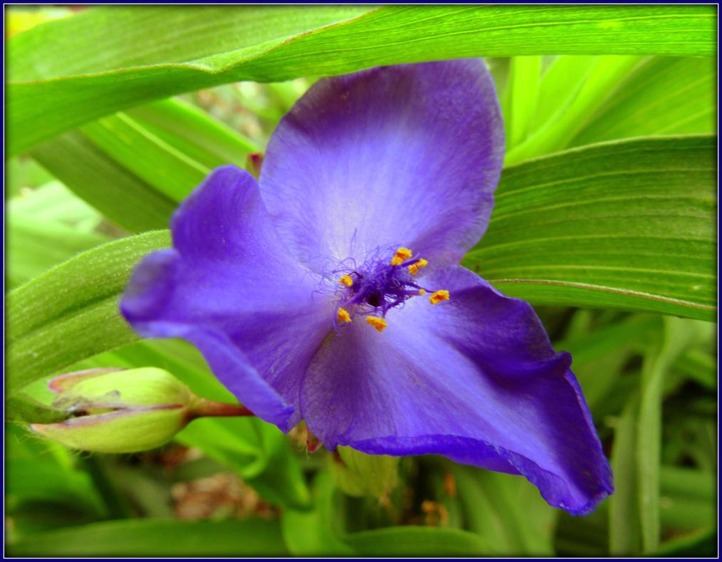 Blue Ivy Violet By Sugaree 33 On Deviantart
