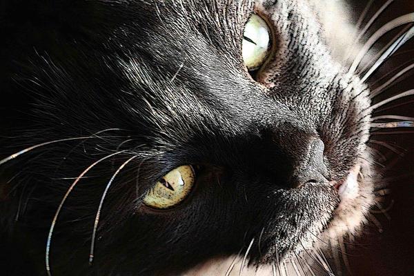 JadeTarsier's Profile Picture