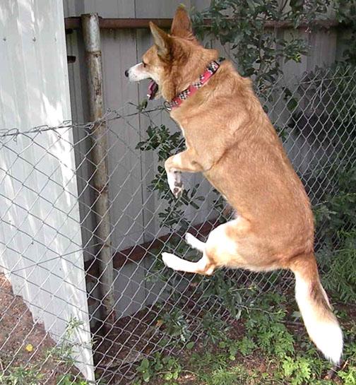 Crazy Dog by siannajmj