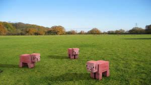 Three pigs on a grass field