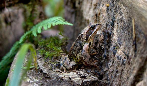 Mr. Froggy