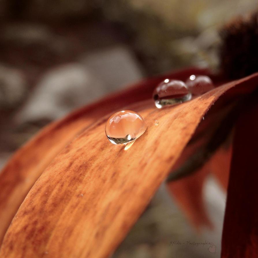 Autumn drops by xxida