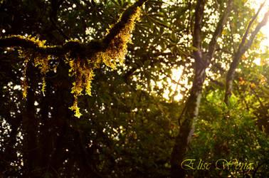 Mossy Morning by ewmh1