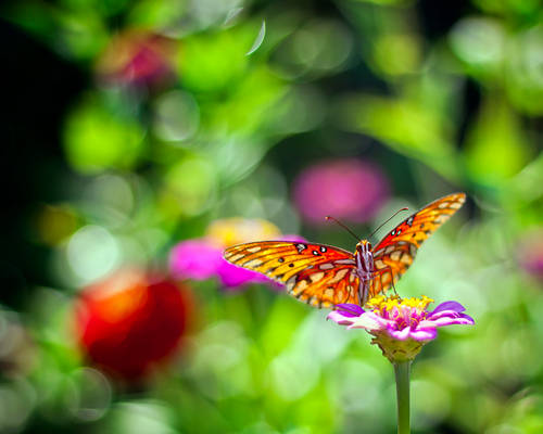 Butterfly in the Morning
