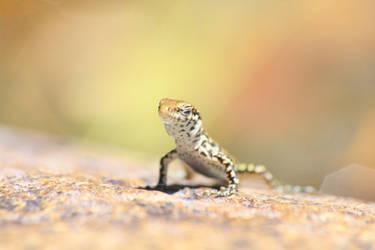 Lazy Lizard by Cellshots