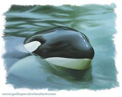 Orca say hallo