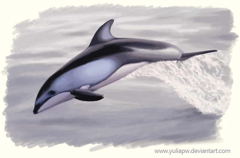Pacific White-Sided Dolphin by YuliaPW on deviantART - photo#35
