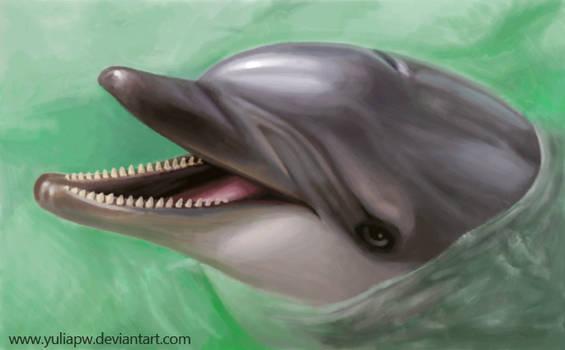 Dolphin: Tursiops truncatus