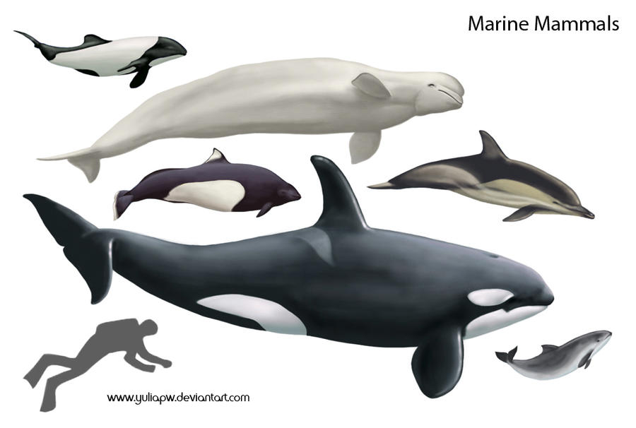 Marine Mammals by YuliaPW on DeviantArt 10 Examples Of Reptiles