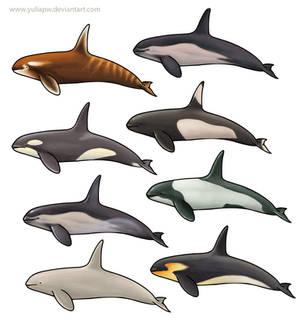 Orcas?