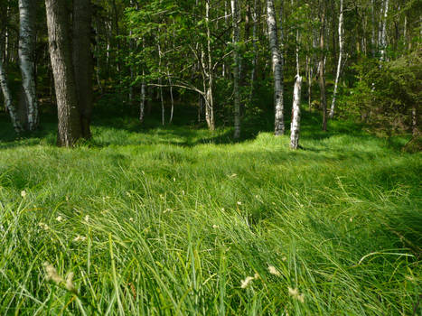 Grass in Forest