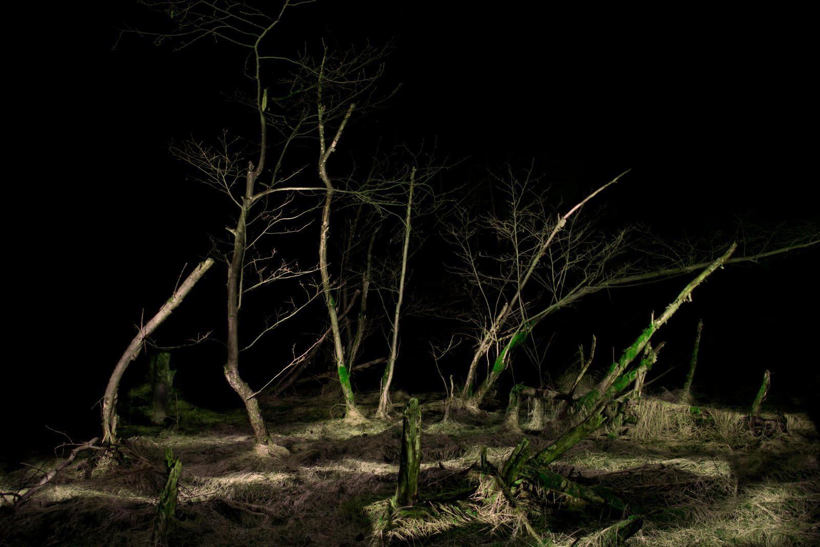 Dead Forest at Night by PanMari