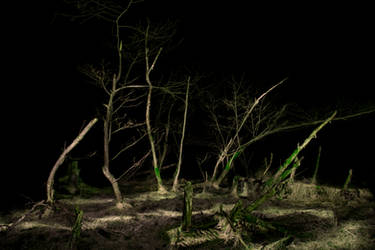 Dead Forest at Night