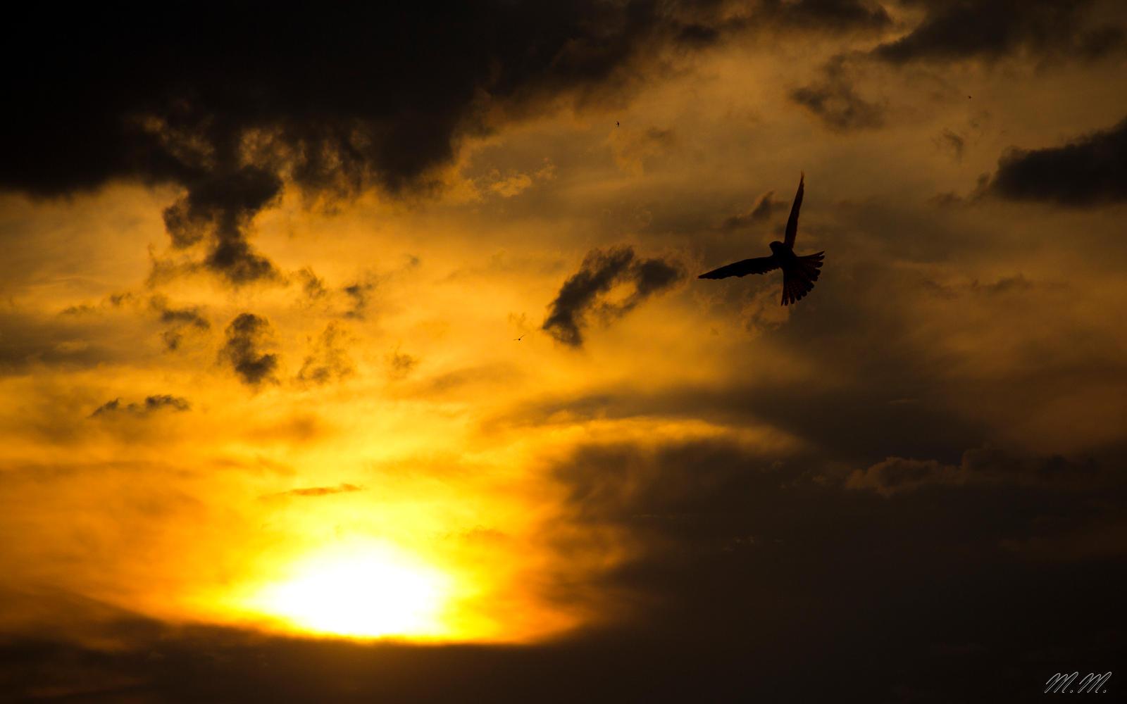 Bird enjoying Sunset by PanMari
