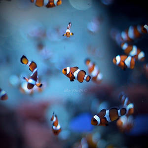 Nemo's friend by Alexandre-Bordereau