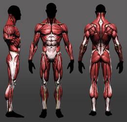 Anatomy study update