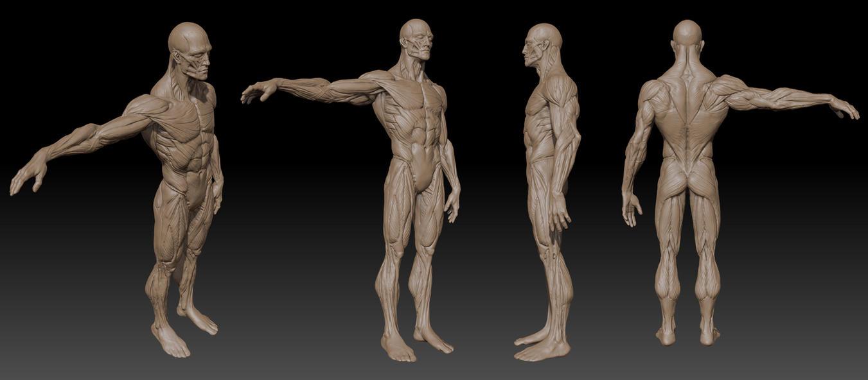 Anatomy Zbrush by mojette