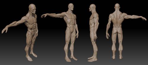 Anatomy Zbrush