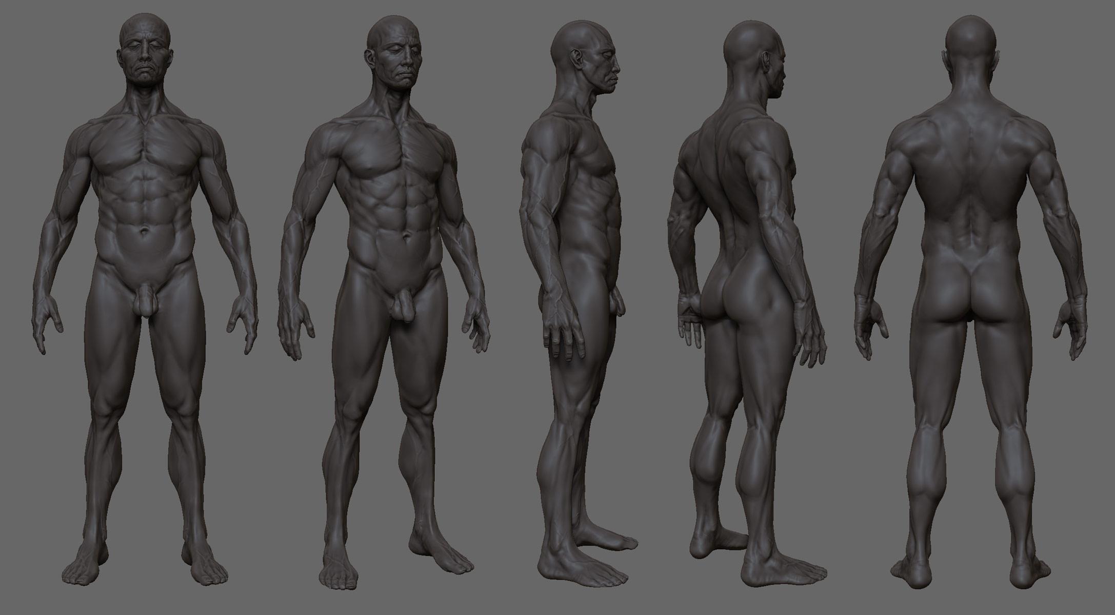 Anatomy study ZB3 by mojette