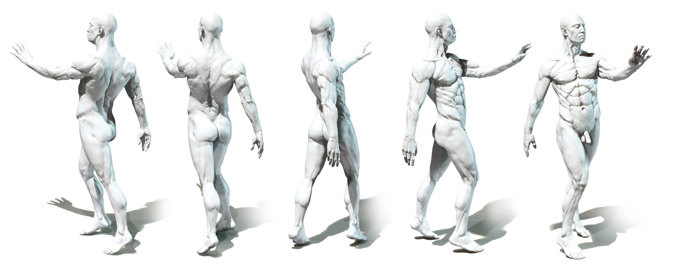 Anatomy Of Art Choice Image - human body anatomy