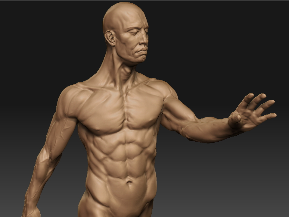 anatomy study in ZB3 by mojette