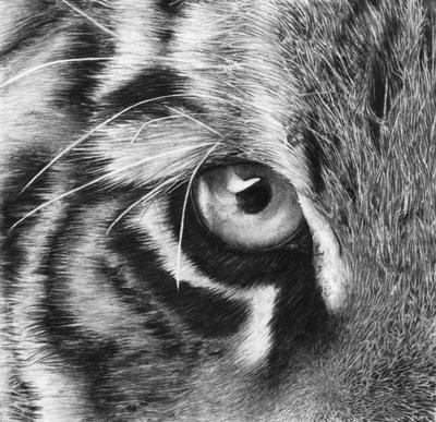Eye of the Tiger by squanpie