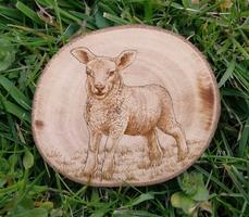 Pyrography Lamb