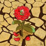 Rose in the desert