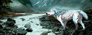 Tundra Banner Cropped