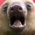 Sloth - AAAHHHHHH!